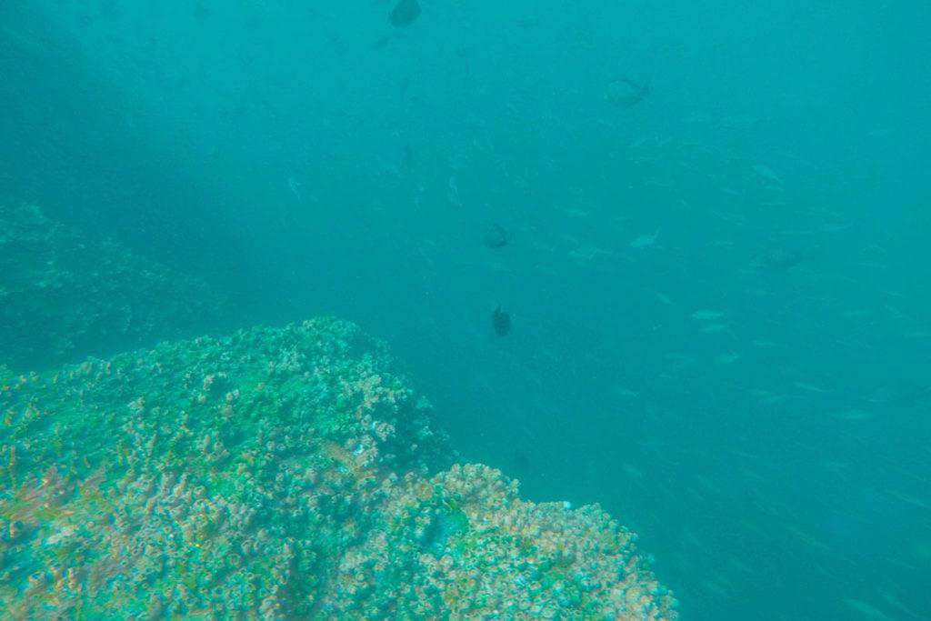 Scuba Diving at Hikkaduwa
